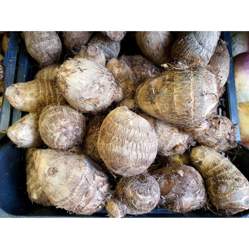 Kochbanane Gelb 1 Stück | Plantain Yellow